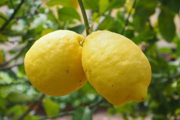 柠檬美白方法小技巧让你肌肤白嫩似雪